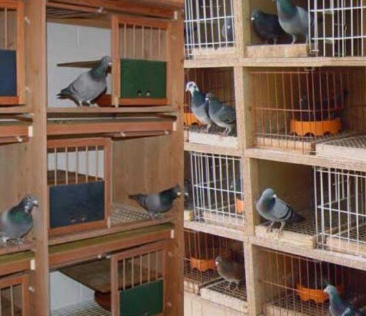 Analisis Usaha Ternak Burung